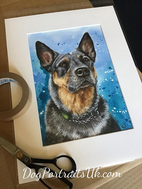 Australian Cattle Dog painting, Custom dog pet portrait painting in watercolour