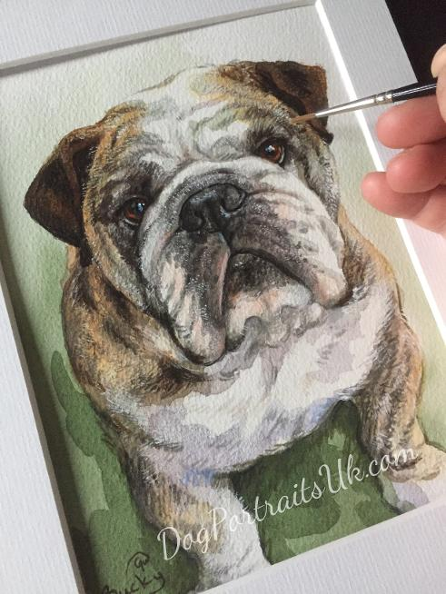 custom pet portrait in watercolour, bulldog painting